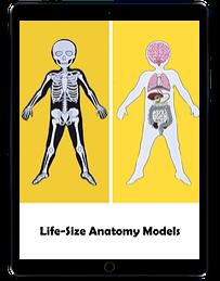 Life Size Anatomy Models ipad